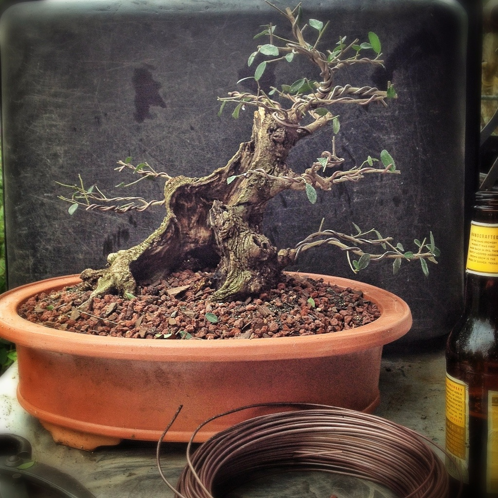 How i make bonsai soil adam 39 s art and bonsai blog for What is soil made from