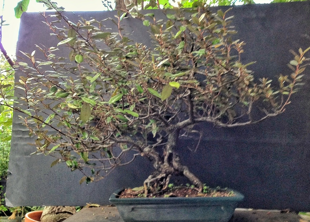Bonsai Classes On Long Island