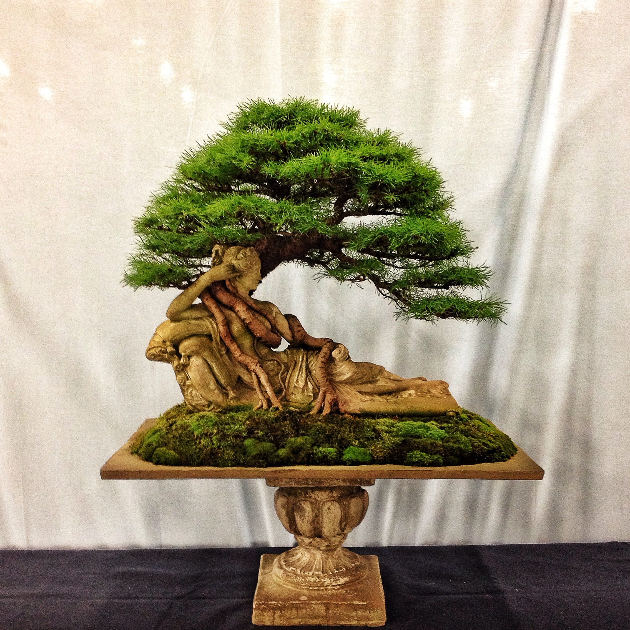 Bonsai Art For Living Room: Rochester Or Bust: My Trip To The 4th U.S. National Bonsai