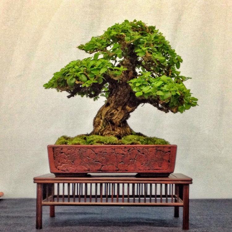 Rochester Or Bust My Trip To The 4th U S National Bonsai Exhibit Adam S Art And Bonsai Blog