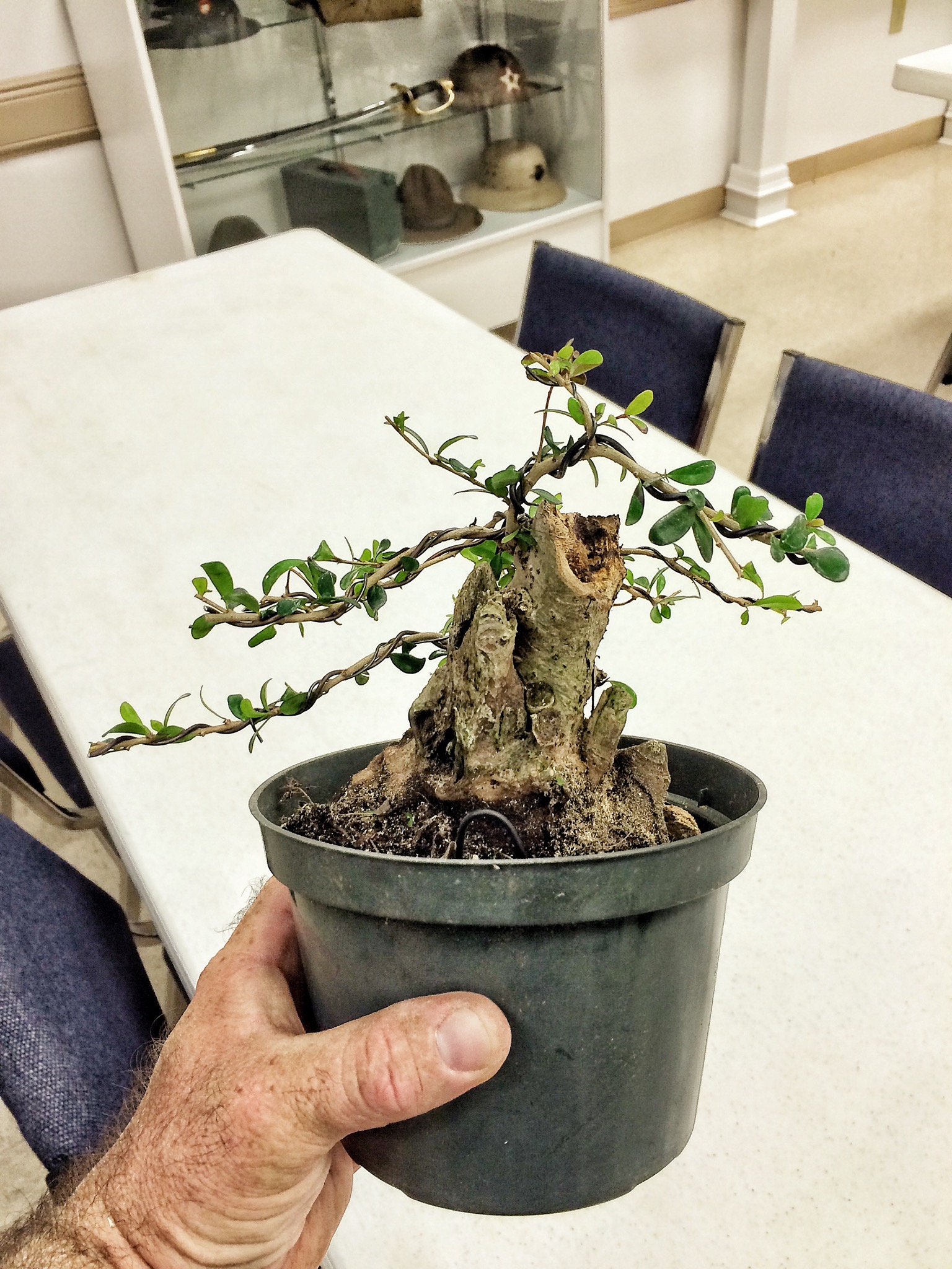 Bonsai dating after divorce