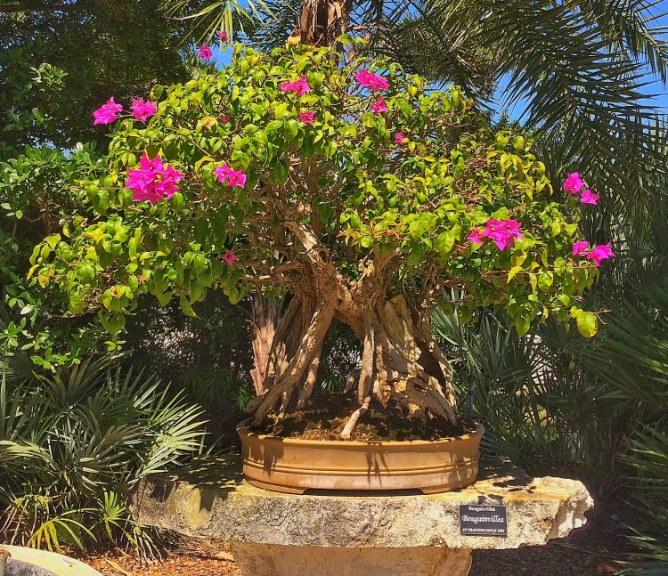 The Largest Public Tropical Bonsai Collection In North America Part One Adam S Art And Bonsai Blog
