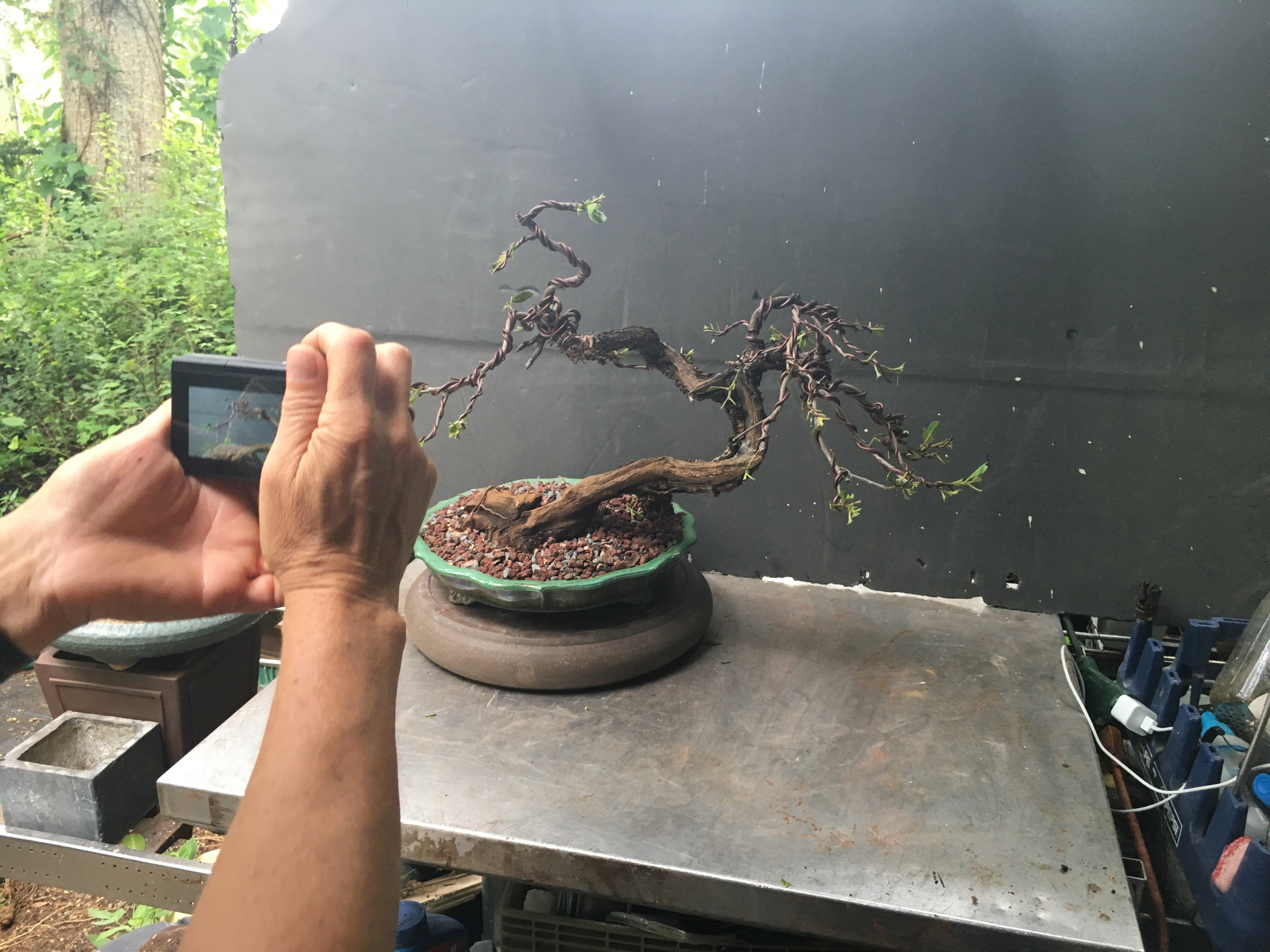 Amazing Adamaskwhy On Youtube Adams Art And Bonsai Blog Wiring 101 Cajosaxxcnl