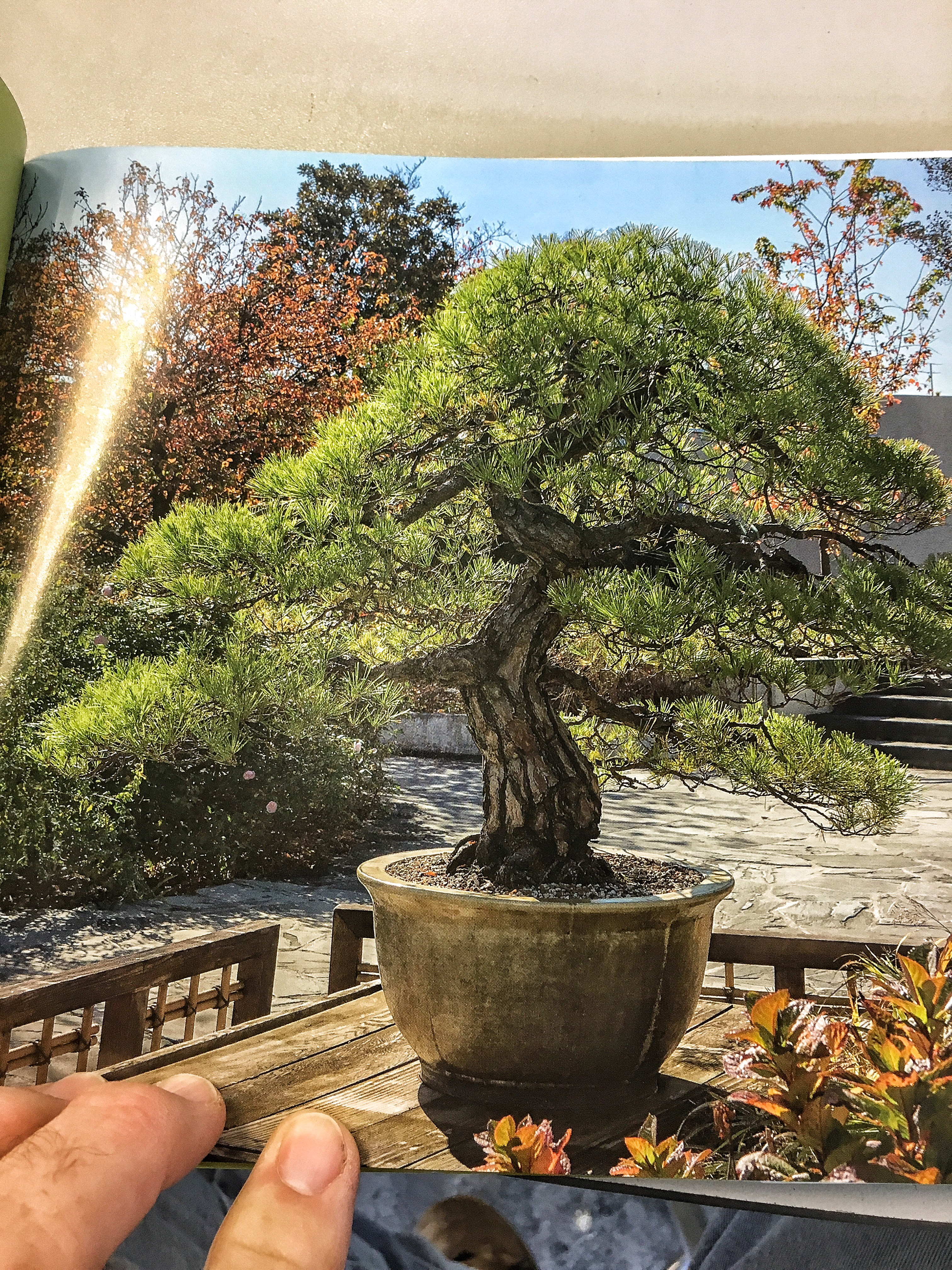Bonsai And Penjing Ambassadors Of Peace Amp Beauty Book Review