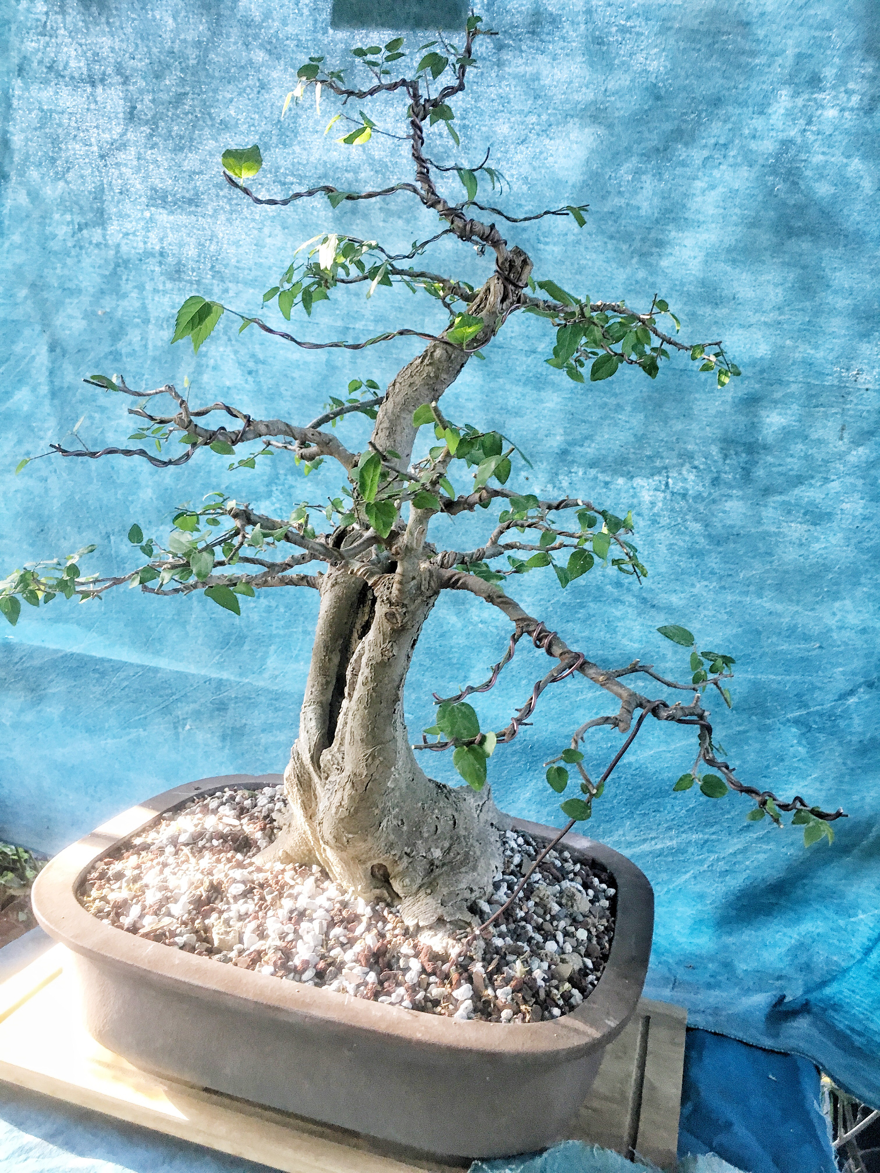 A matter of taste or, the past is prologue   Adam\'s Art and Bonsai Blog