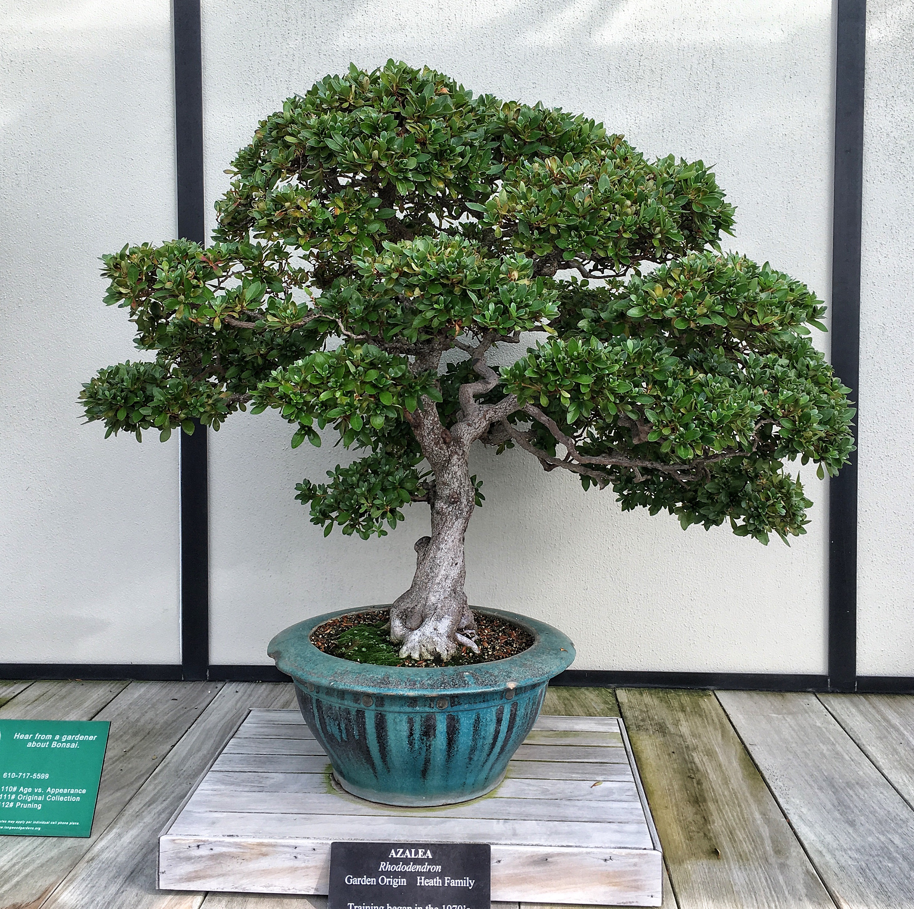 Longwood Gardens And The Mythical Kennet Collection Adam S Art And Bonsai Blog